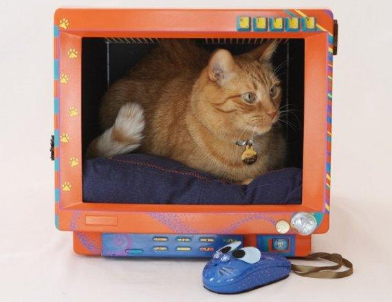 تبدیل مانیتور قدیمی به تخت استراحت گربه